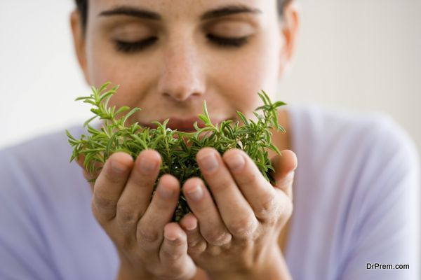 Photo of Herbs that help boost Estrogen levels